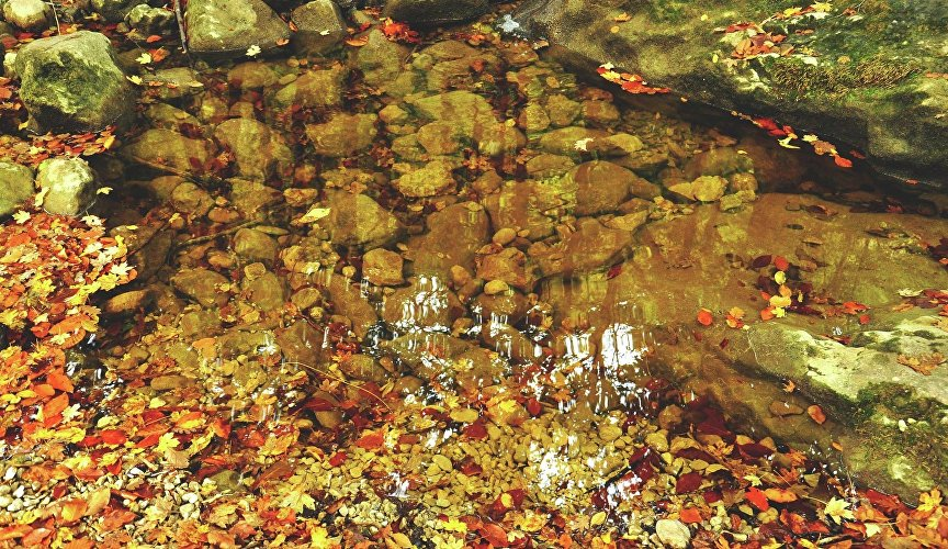 Autumn foliage in the pond